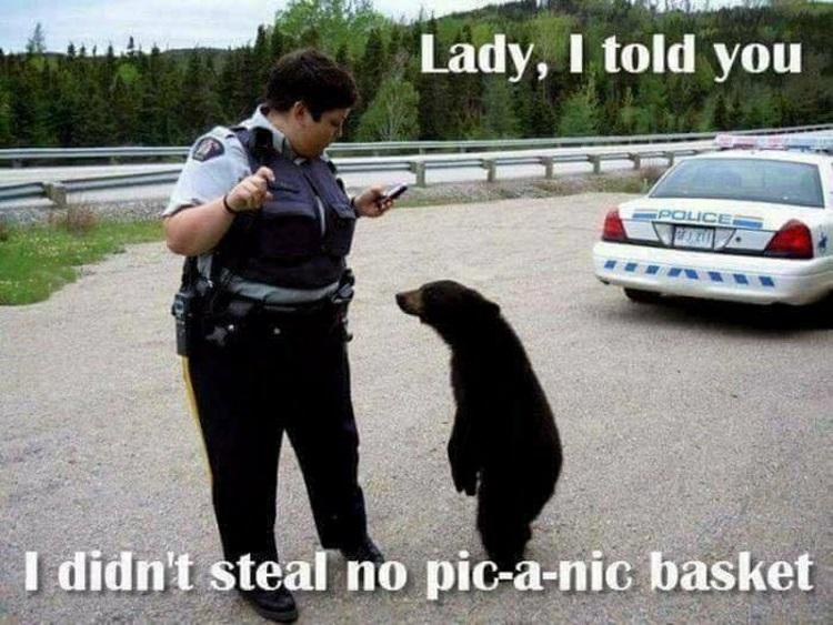 1-bear-n-cop.jpg