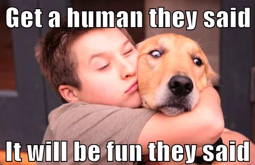 14-funny-dog-meme.jpg