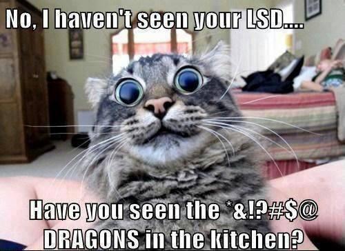 cat-lsd-dragons.jpg