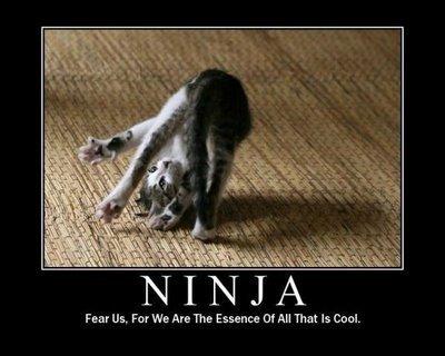 Cats-are-ninjas-cats-18104173-400-320.jpg