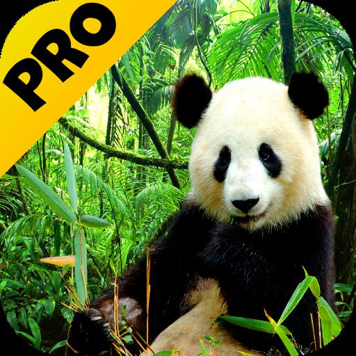ic_launcher_ap_pro.png