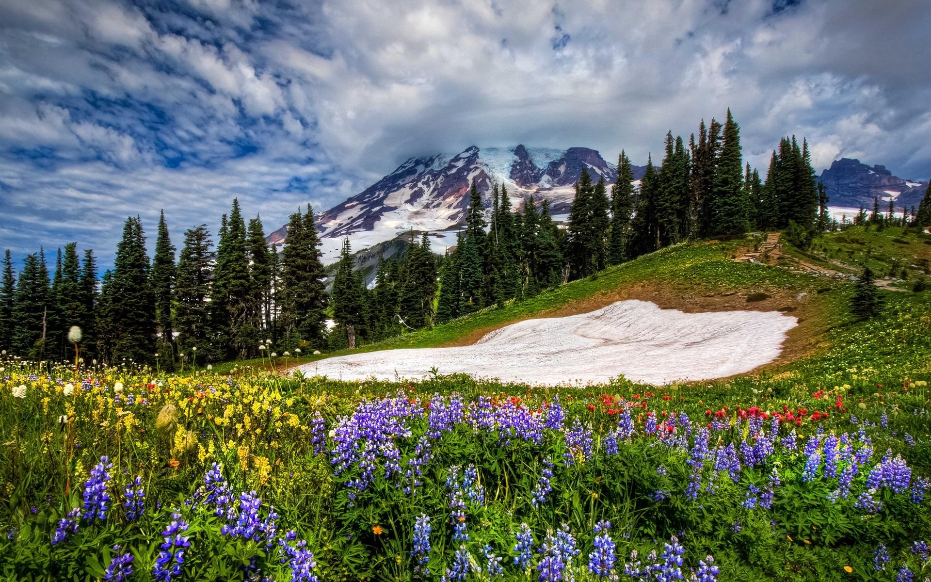 Mountains-flowers-sky-spring-grass_1920x1200.jpg