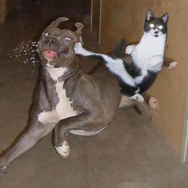 ninja-cat-hiding-funny-105__605.jpg