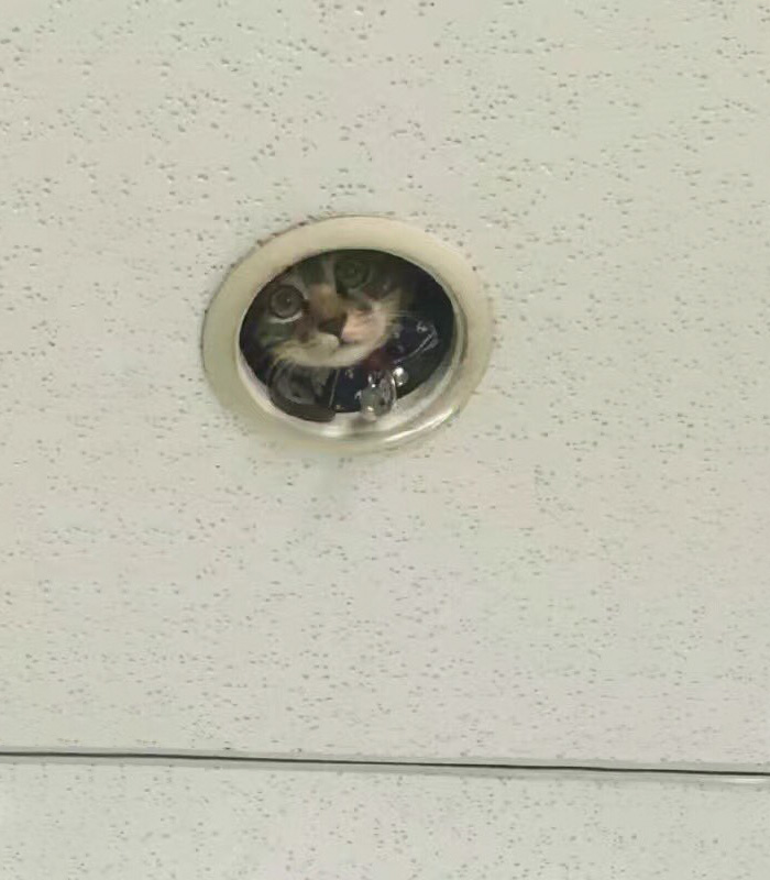 office-ceiling-cat-monitoring-omocha-no-uma-2.jpg
