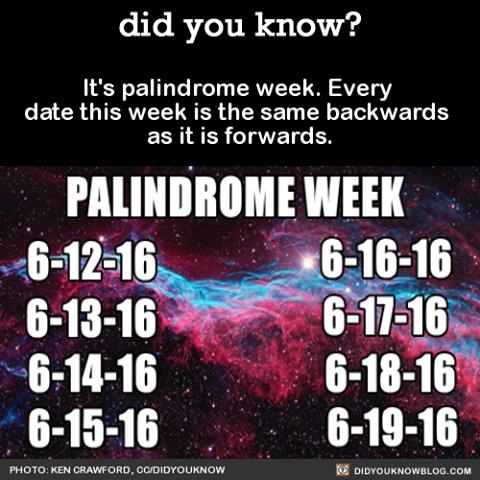 palindromeweek.png