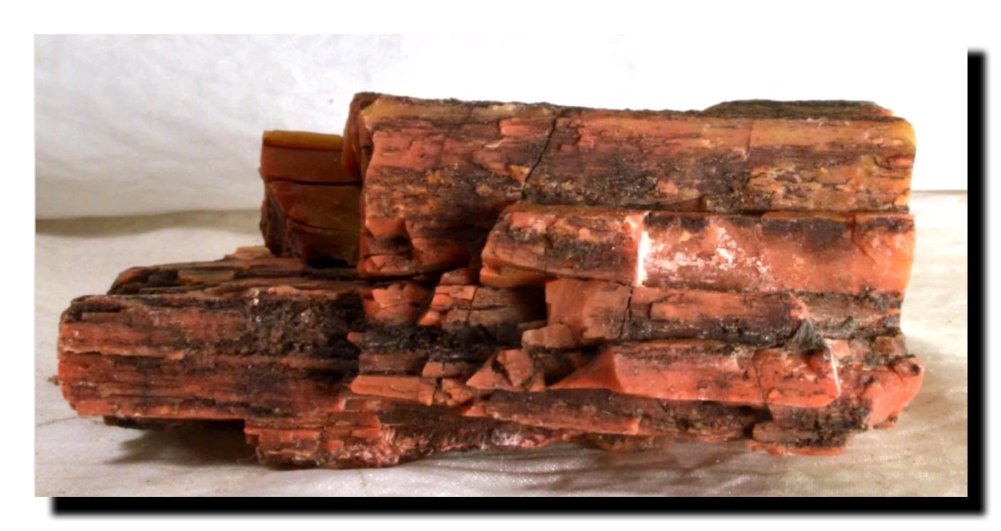 petrified wood Holbrook Arizona.jpg