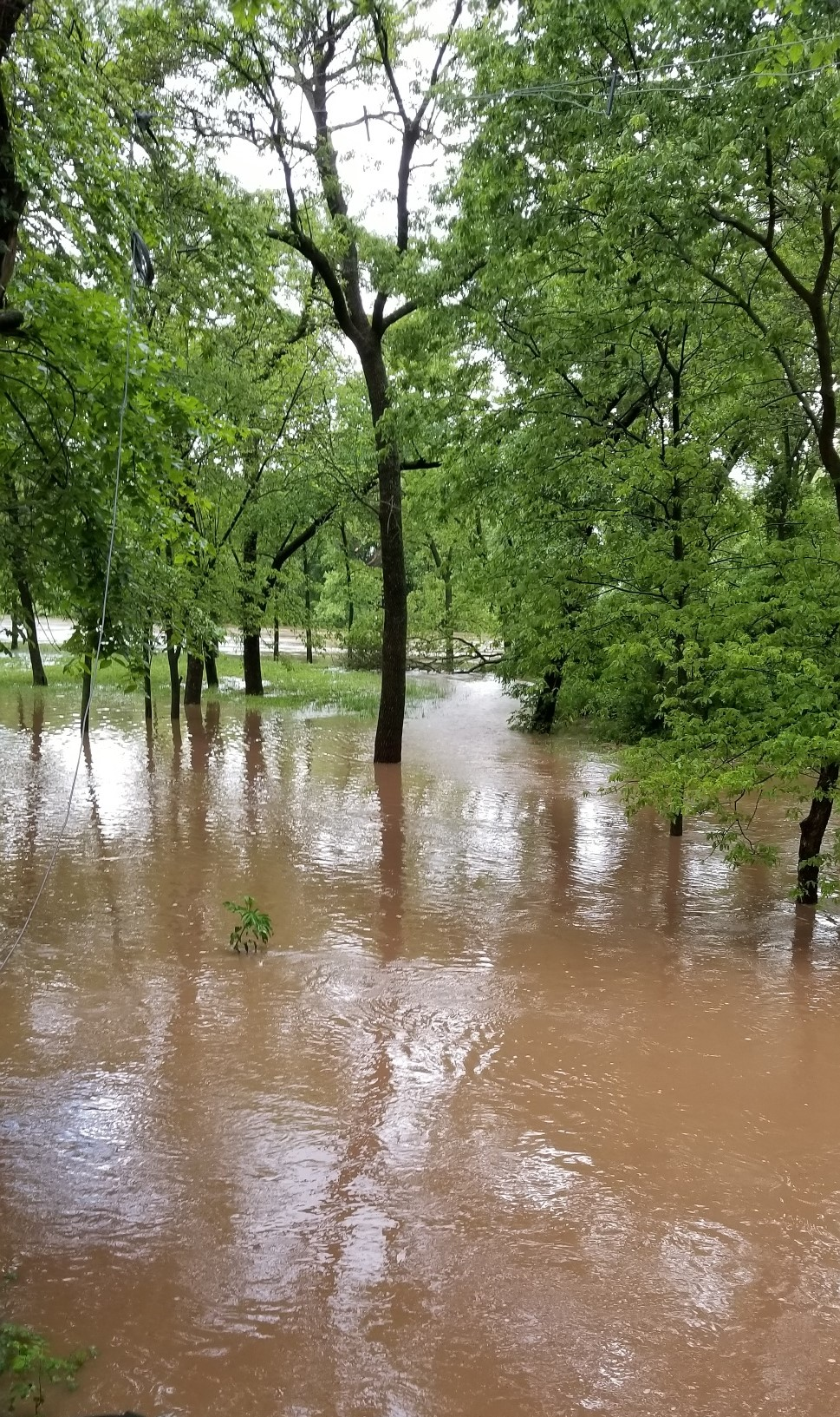 Today's flood.jpg