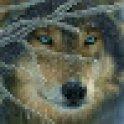 WolfSpyryt